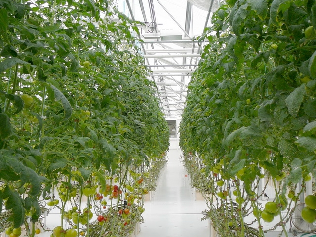Transplant Greenhouses | Commercial Greenhouses Manufacturer