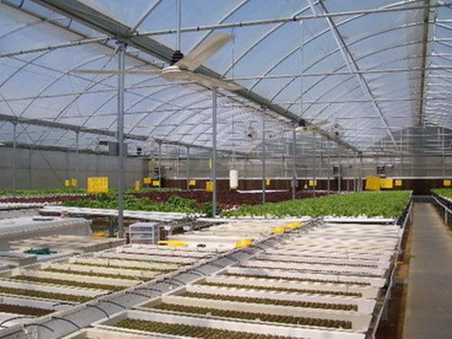 Propagation Greenhouses | Commercial Greenhouses Manufacturer