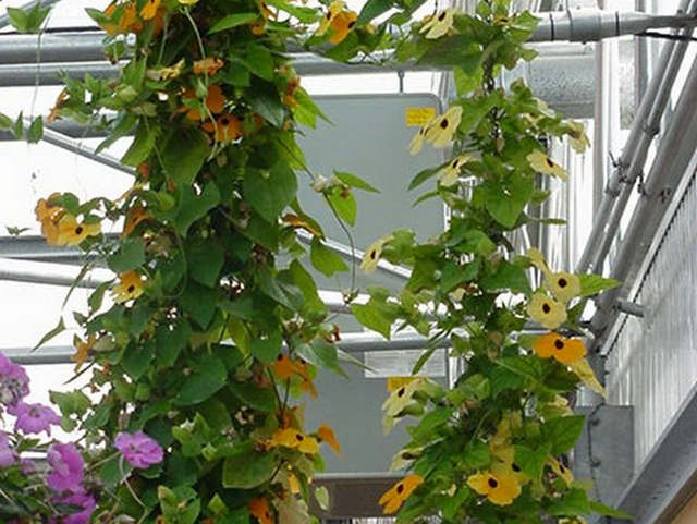 Comparison of Systems | Heater systems | Commercial Greenhouse Equipment