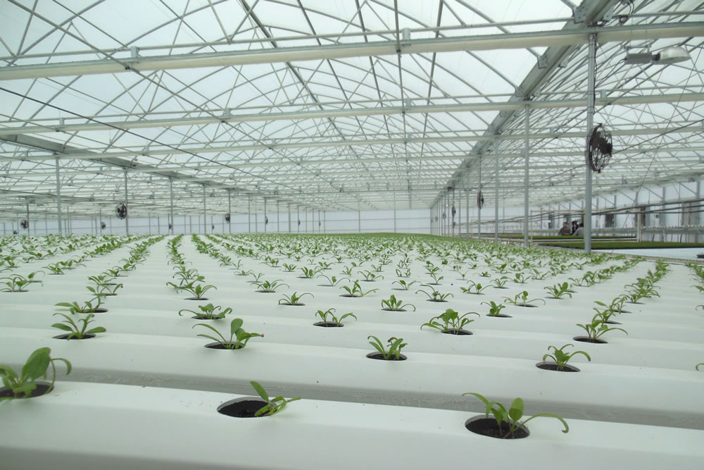 Go Green Agriculture Goes with Agra Tech Greenhouse | Commercial Greerhouse Manufacturer