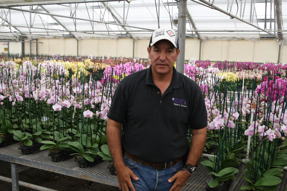 The Finest Orchids in the World are Grown in Agra Tech Greenhouses | Agra Tech