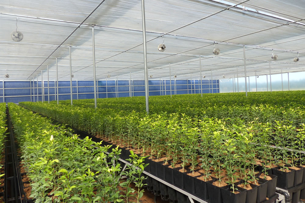 AB Ludvig Svennson's Climate Screens Give Greenhouse Growers More Control | Commercial Greerhouse Manufacturer