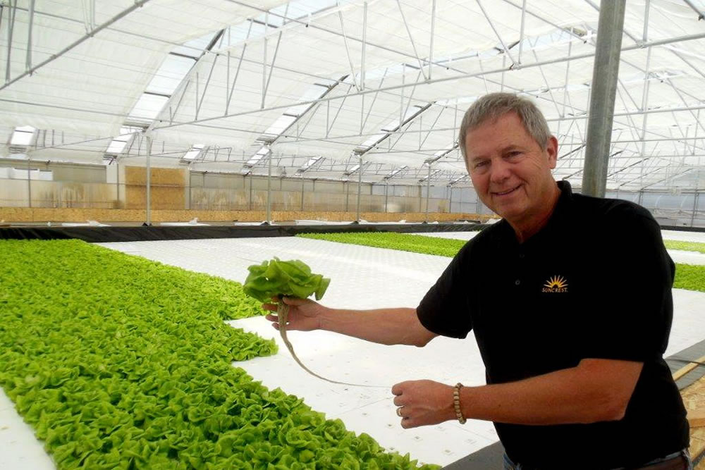 Suncrest USA Shows the Way to a Better Day for Greenhouse Farmers | Commercial Greerhouse Manufacturer