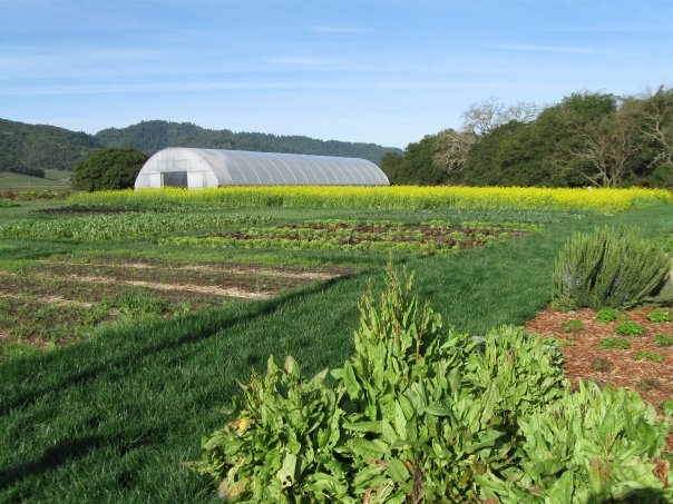 French Laundry & Bouchon Bistro using Thermolator greenhouse to grow their own organic vegetables | The French Laundry | Yountville, CA