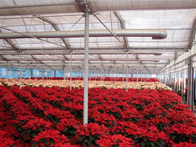 Zalinda Farms got an Insulator greenhouse for a wholesale premium plant nursery in Pala | Zalinda Farms | Pala, CA