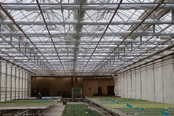 Agra Tech's Energy curtain system installed at North West Hort | North West Hort | Mabton, WA