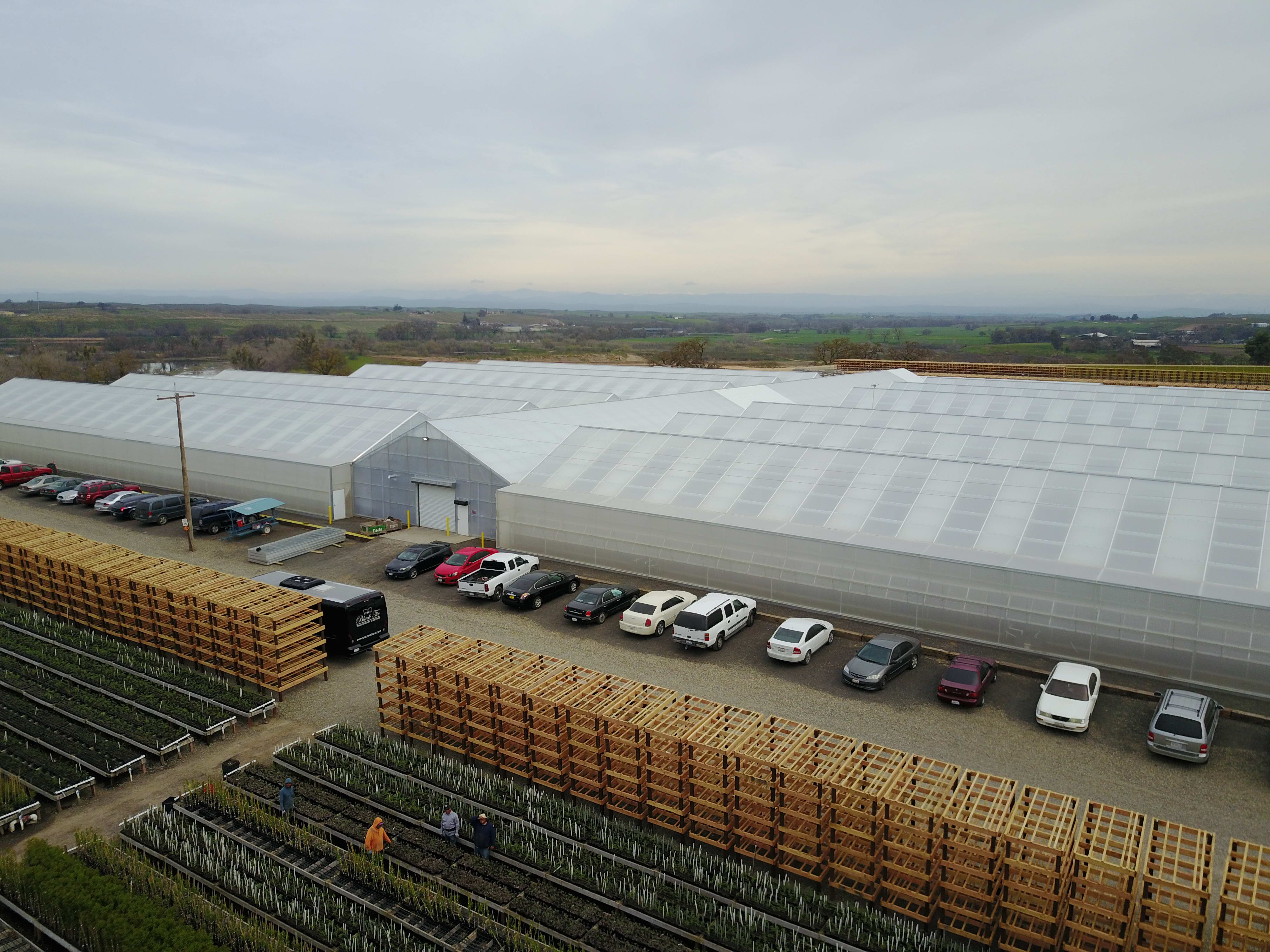 120,000 sq ft expansion increases production, adds efficiency, and saves labor | Dave Wilson Nursery, LLC | Hickman, CA
