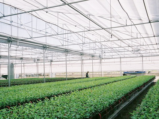 greenhouse heating