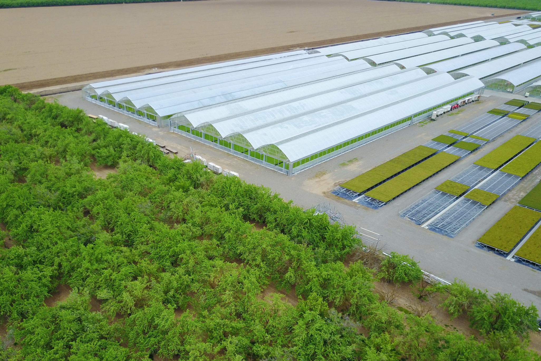 Commercial Greenhouse Continental