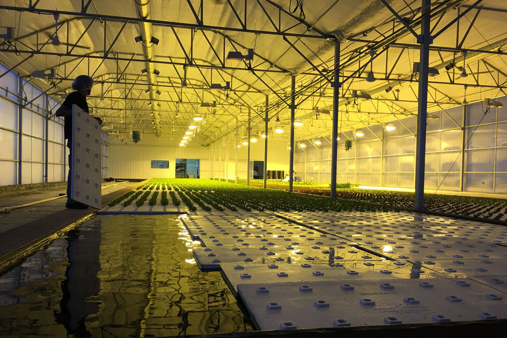 Brightwater Farms Doubles Capacity with New ATI Greenhouse | Agra Tech