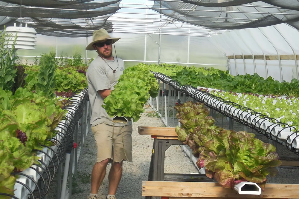 War Veteran/Second-Generation Farmer Embraces Greenhouse Way | Commercial Greerhouse Manufacturer