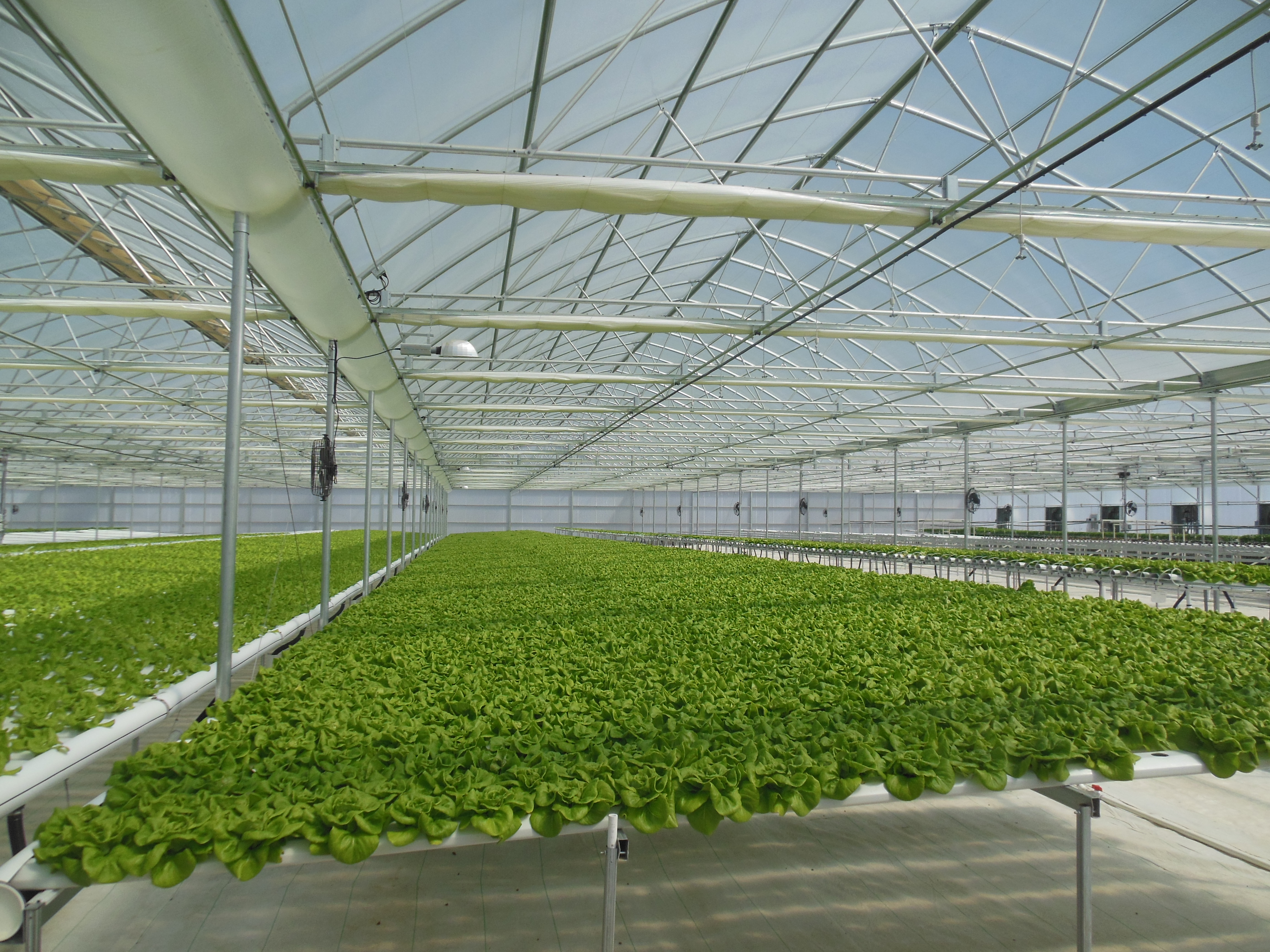 Range of 8 Agra Tech Continental greenhouses at GoGreen Agriculture | GoGreen Agriculture | Encinitas, CA