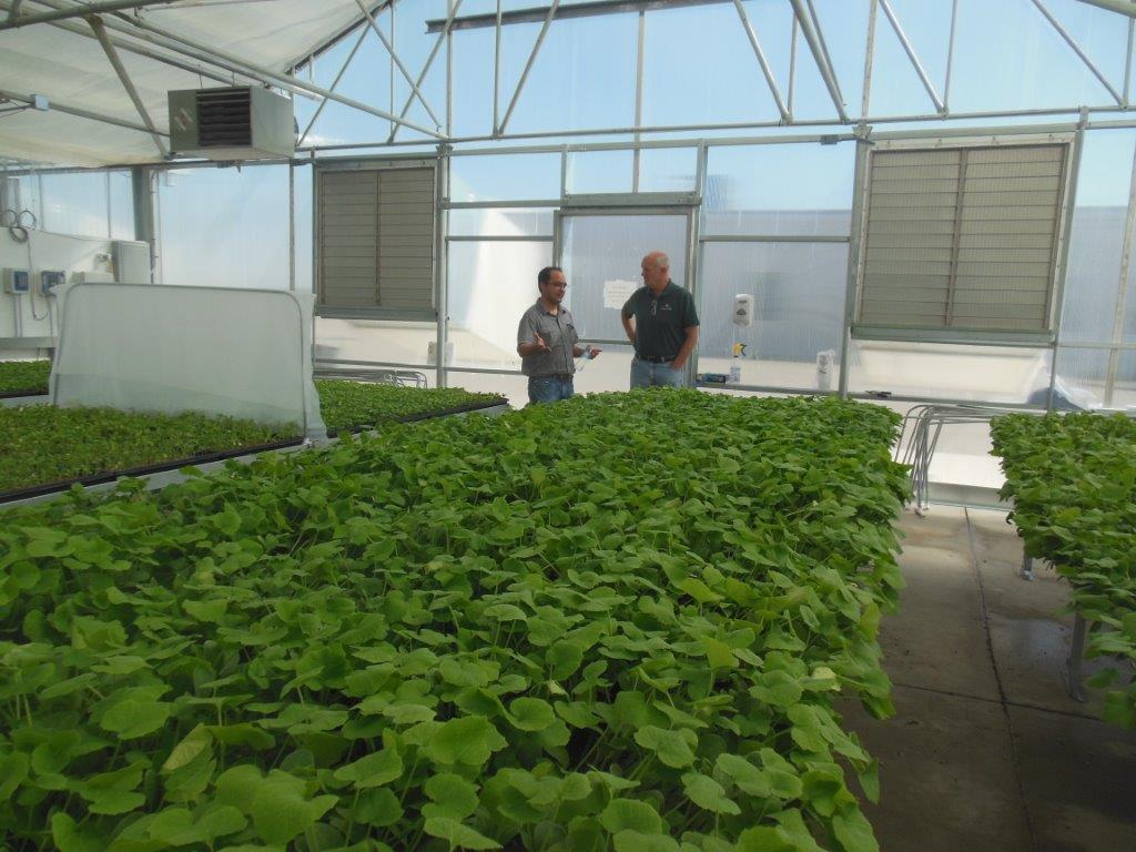 Commercial Greenhouse | Agra Tech