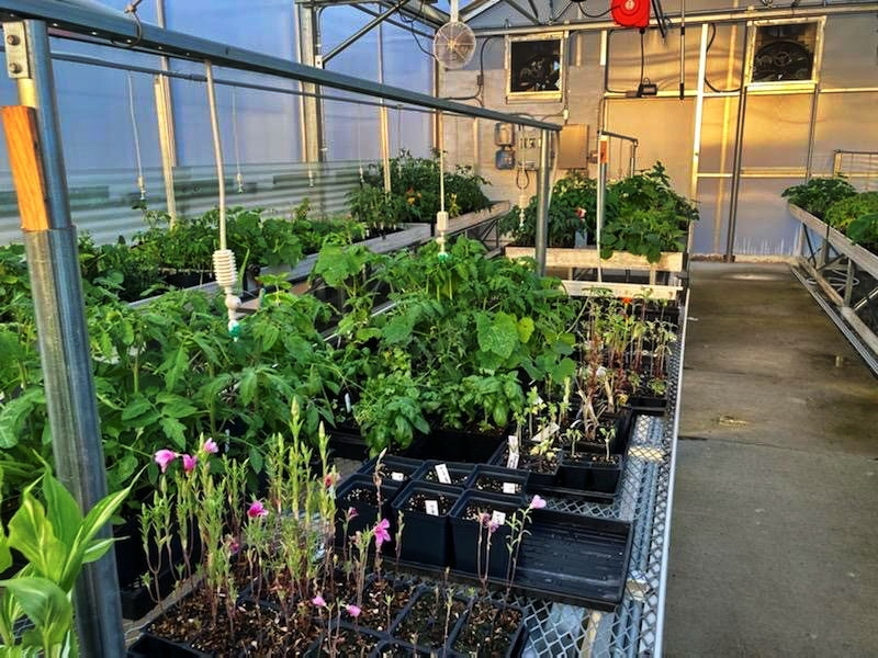 Inside the Solar Light Greenhouse