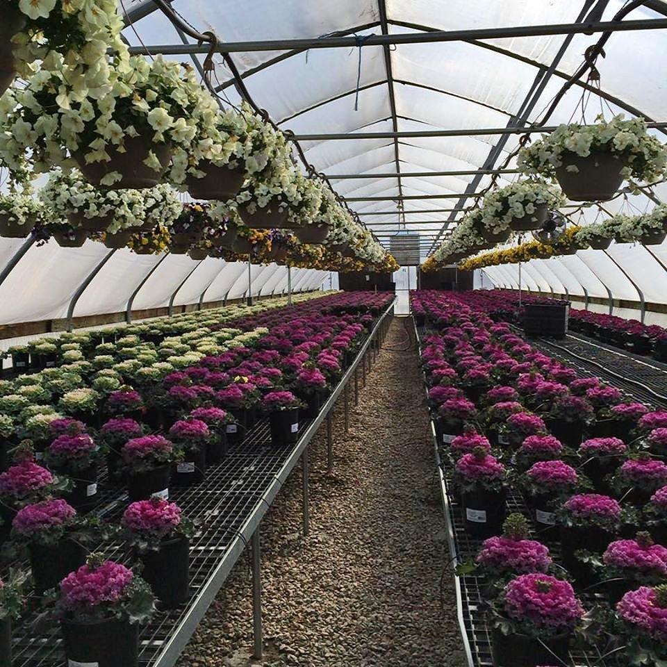 Inside the greenhouses the plants flourish