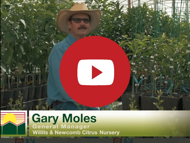 Willits & Newcomb - The Citrus Nursery | Commercial Greenhouse Manufacturer