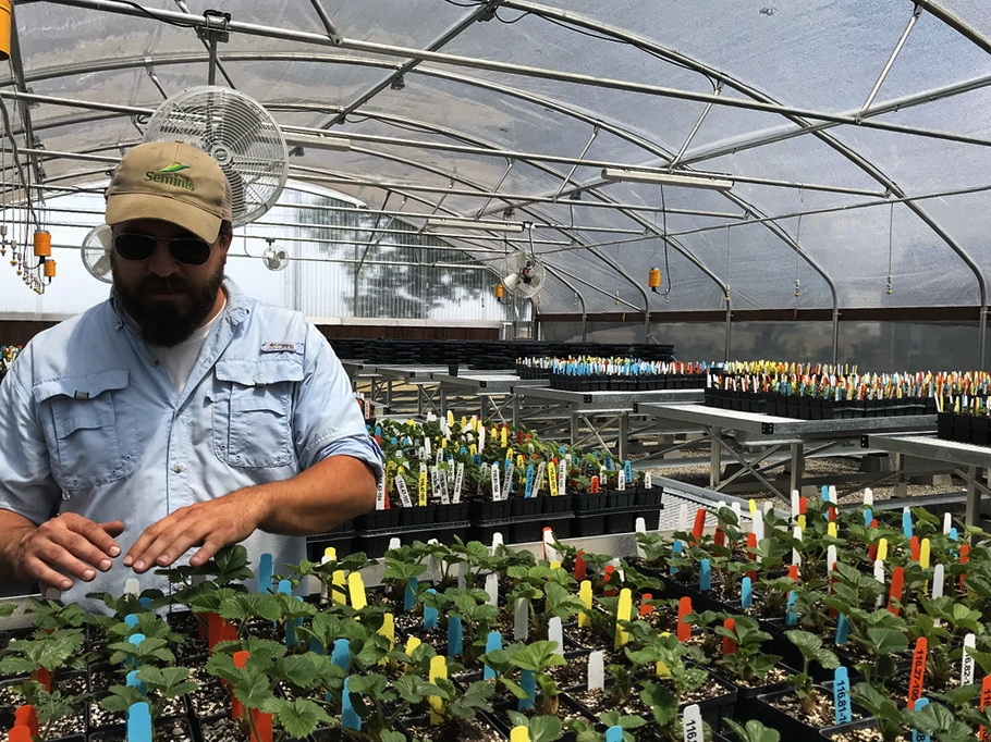 California Berry Cultivars | Commercial Greenhouse Manufacturer